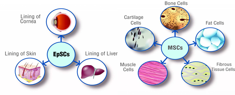 about-umbilical-cord-tissue